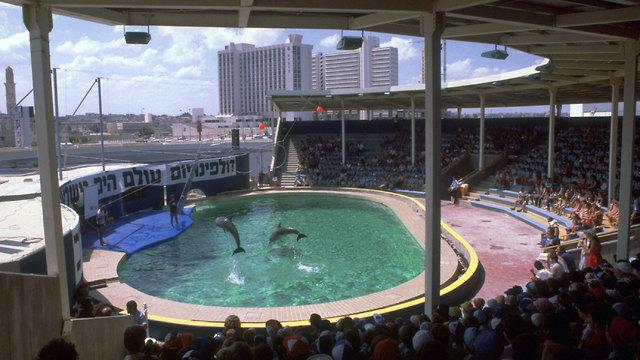 Дельфинарий в 1981 году. Фото: Яаков Саар,